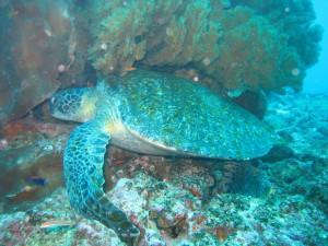 Scuba-Diving-–-Australia-1024x768