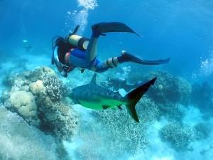 Scuba Diving in Andaman 2